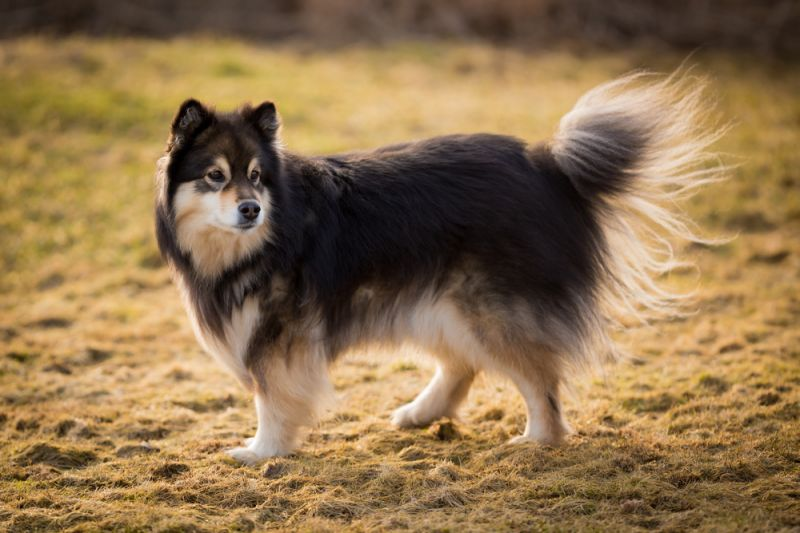 The 50 Longest Living Dog Breeds 58778 30631
