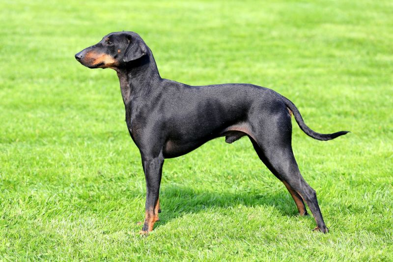 The 50 Longest Living Dog Breeds 58782 30631