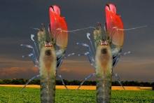 H γαρίδα που πήρε το όνομα των Pink Floyd