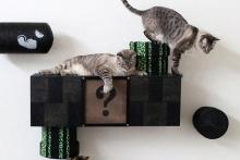 Ένα παιχνίδι που θα λατρέψουν οι γάτες