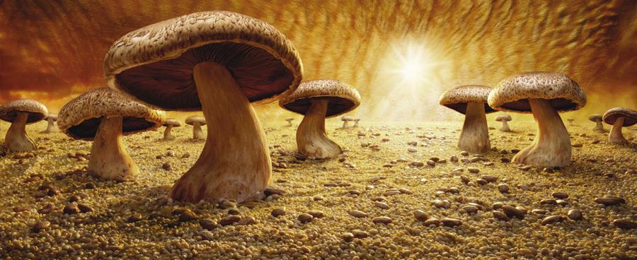 Mushroom Savanna