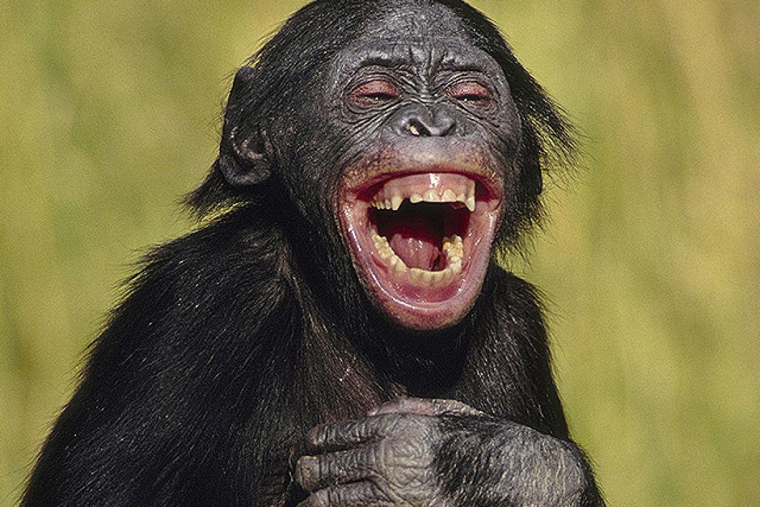 Γελάνε τα ζώα;