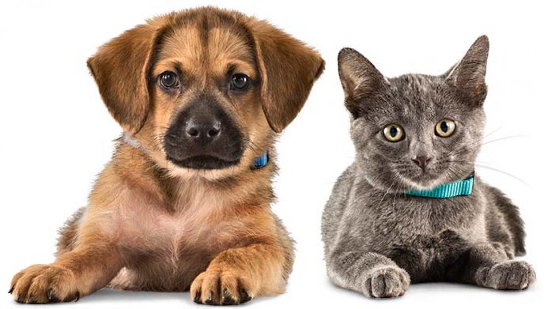 24391b9c2e52 Αναμένοντας τον νέο νόμο για τα κατοικίδια ζώα